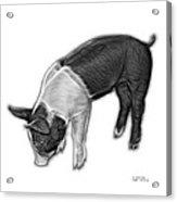 Greyscale Piglet - 0878 Fs Acrylic Print