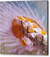 Grid Above Flowers Acrylic Print
