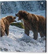 Grizzlies Fighting Acrylic Print