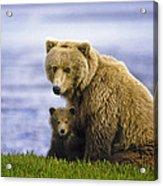 Grizzly Bear And Cub Acrylic Print
