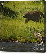 Grizzly Bear-signed-#1158 Acrylic Print
