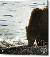 Grizzly Bear-signed-#4137 Acrylic Print