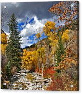 Grizzly Creek Cottonwoods Acrylic Print