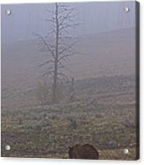 Grizzly Sow And Twins  #5817 Acrylic Print