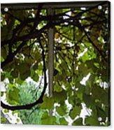 Gropius Vine Acrylic Print