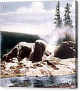 Grotto Geyser Yellowstone Np Acrylic Print