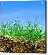 Ground And Grass Acrylic Print