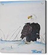 Ground Eagle Acrylic Print