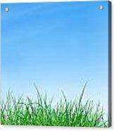 Ground Grass And Sky Acrylic Print