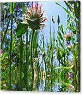 Ground Level Flora Acrylic Print