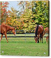 Group Activity Acrylic Print by Kristi Swift