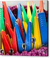 Group Of Colorful Clothespins Acrylic Print