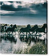 Group Of Horses Crossing A River Acrylic Print