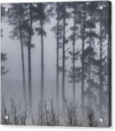 Growing In The Fog Acrylic Print