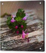 Growing Like Weeds Acrylic Print