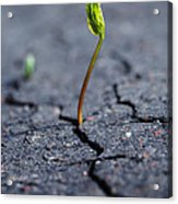 Growing Plant Acrylic Print