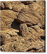 Growing Rock Acrylic Print