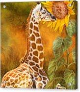 Growing Tall - Giraffe Acrylic Print