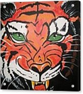 Growling Tiger Acrylic Print
