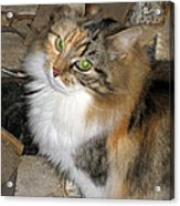 Grumpy Kitty With Emerald Eyes Acrylic Print
