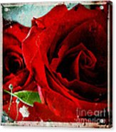 Grunge And Roses Acrylic Print by Sharon Coty