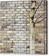 Grunge Background Acrylic Print