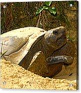 Florida Gopher Tortoise And Home Acrylic Print