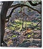 Guadalupe State Park Acrylic Print