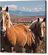Guardians Of The West Acrylic Print
