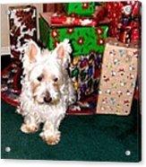Guarding Christmas Acrylic Print