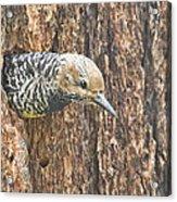 Guarding The Nest Acrylic Print