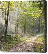 Guided Trail Acrylic Print
