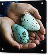 Guillemot Egg Acrylic Print