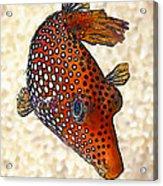 Guinea Fowl Puffer Fish Acrylic Print