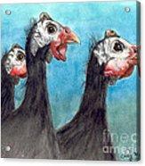 Guinea Hen Rooster Trio Farm Ranch Animal Art Acrylic Print