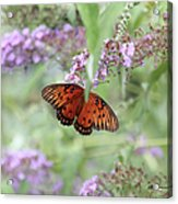 Gulf Fritillary Agraulis Vanillae-featured In Nature Photography-wildlife-newbies-comf Art Groups  Acrylic Print