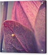 Gulf Fritillary Butterfly Egg Acrylic Print