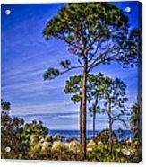 Gulf Pines Acrylic Print