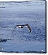 Gull Flying Over Water Acrylic Print