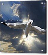 Gull Flying Under A Radiant Sunburst Acrylic Print
