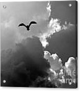 Gull In Flight Mb059bw Acrylic Print