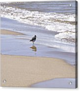 Gull On The Shore Acrylic Print