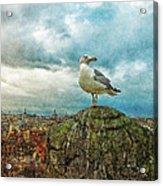 Gull Over Rome Acrylic Print by Jack Zulli