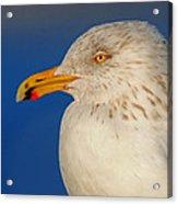 Gull Portrait Acrylic Print