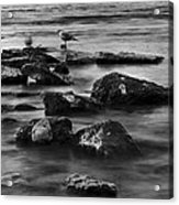 Gull Rock Acrylic Print by Rod Sterling