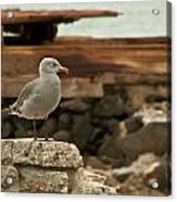 Gull Wall Acrylic Print by Robert Bascelli