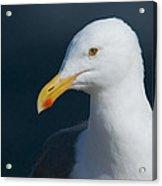 Gull Watcher Acrylic Print