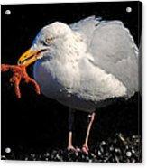 Gull With Starfish Acrylic Print