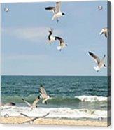 Gulls A Dance'n Acrylic Print