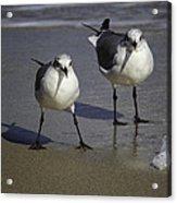 Gulls On The Beach Acrylic Print